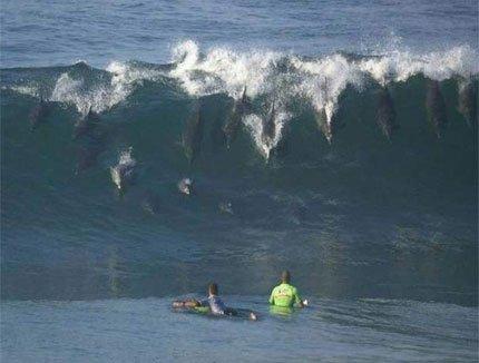 vaguededauphins.jpg